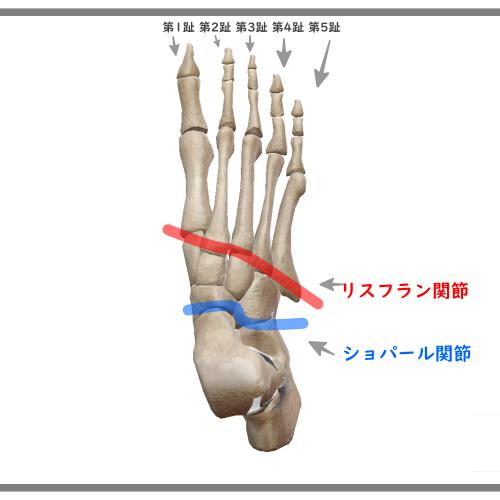 リスフラン関節の図説
