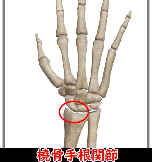 橈骨手根関節
