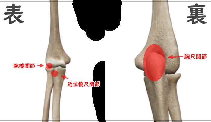 肘の関節正式名称