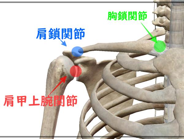 肩関節 正式名称
