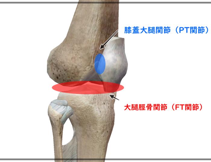 膝関節の名称